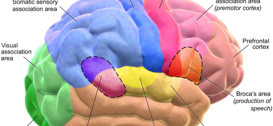 Brain_Motor Sensory_